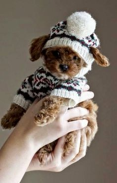 Doggy Fashions --she's knit something again . . .
