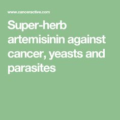 Super-herb artemisinin against cancer, yeasts and parasites. Artemisinin annua, or Sweet Wormwood, is a herb found from Pakistan to China, and is the current treatment of choice for malaria. The highest concentration of active ingredient is found in the leaves and flowers. There are 14 other Artemisia species.