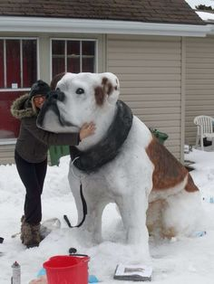 This Snow Dog Is Really COOL! Cold, in fact!!