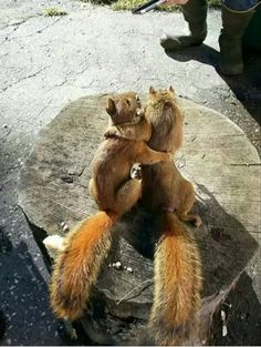 Squirrel Hugs..... SO Darn Cute.....