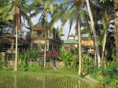 Soulshine Yoga Retreat in Bali - cofounded by Michael Franti, a personal hero of mine. I will be there... one day.
