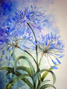 agapanthus watercolor by Yvonne Harry.