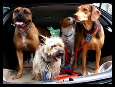 Fen The Dog Taxi | Flickr - Photo Sharing!