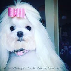 Ella's 1 year Gotcha Day pic. Hartman & Rose sweet pink collar. Bow by Mama - mia.lily.ella.brooke on IG #maltese #hairbow