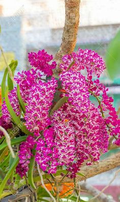 Foto Unusual Flowers, Rare Flowers, Amazing Flowers, Climbing Flowers, Rare Orchids, Growing Orchids, Flower Photos, Container Gardening, Hibiscus