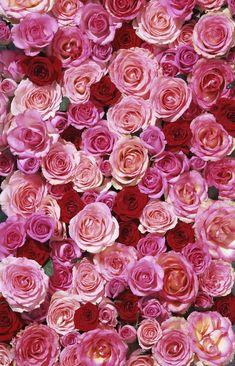 Ideas Wallpaper Iphone Love Pink Floral Patterns For 2019 Wallpaper Iphone Love, Flower Phone Wallpaper, Flower Wallpaper, Trendy Wallpaper, Flowers Nature, Pretty Flowers, Purple Flowers, Romantic Roses, Beautiful Roses