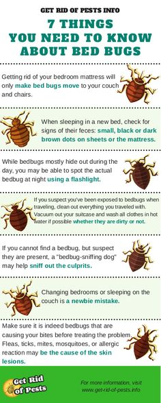 Bed Bugs Can Fit Into Almost Any Crack, Crevice, Or Protected Location. They