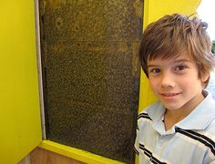 Honey Place, Urunga Kids Welcome New South, South Wales, 4 Kids, Day Trips, Welcome, Honey