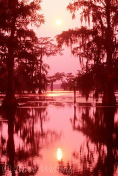 A misty haze at sunset turns cypress trees and the peaceful bayou a soft reddish color in the Atchafalaya Basin in Louisiana. Photography Guide, Outdoor Photography, Nature Photography, Photography Articles, Photography Lighting, Landscape Photography, Louisiana Homes, Louisiana Bayou, Louisiana History