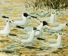 In discussing the work of Charles Tunnicliffe, RA, Jean Parry-Williams gives full credit to the great influence that this talented painter has had on . Ladybird Books, Royal College Of Art, London Art, Wildlife, Birds, Drawings, Sketch Books, Artist, Gull