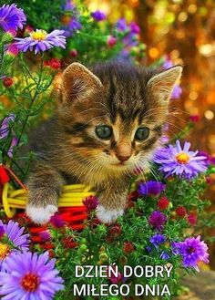 Kittens And Puppies, Cute Cats And Kittens, I Love Cats, Crazy Cats, Kittens Cutest, Beautiful Kittens, Pretty Cats, Bb Chat, Cute Baby Animals