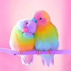 Diamantmalerei – Rainbow Parrot – Full of Beauties Cute Birds, Pretty Birds, Beautiful Birds, Animals Beautiful, Birds 2, Wild Birds, Pretty Animals, Love Birds Pet, Love Birds Drawing