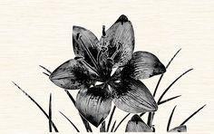 """Piano"" - Вставка декоративная 400х250 Moth, Insects, Bee, Animals, Honey Bees, Animaux, Bees, Animal, Animales"