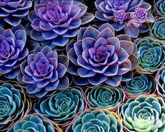 Succulents are uniquely shaped plants, which can get along well with cats. You'll have a fun time to decide which style you'd like to create in your room!