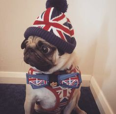 Social Pug Profile | Barry http://www.thepugdiary.com/social-pug-profile-barry/