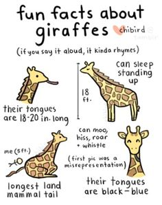 Yes. Giraffes are my all time favorite animal.