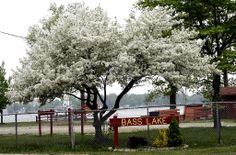 Bass Lake State Beach in Starke County, Indiana