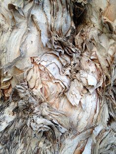 Australian Paper Bark tree detail