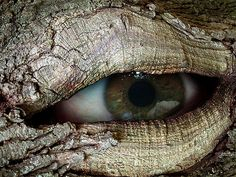 I'm going to sculpt eyes into the tree in our yard now lol Photoshop, For Your Eyes Only, Eye Art, World Best Photos, Beautiful Eyes, Faeries, Mother Earth, Magick, Fantasy Art