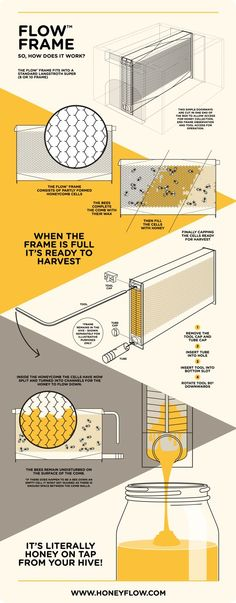 A crowdfunding campaign for The Flow Hive has recently raised making it one of the most successful campaigns of all time. The Flow Hive is a beehive that allows you to get honey Raising Bees, Bee Farm, Hobby Farms, Busy Bee, Save The Bees, Bees Knees, Bee Keeping, Queen Bees, Survival Kits