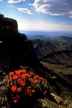 chisos mountains, big bend national park.  We will spend our first three days in the park backpacking to the south rim. sooooo pretty!