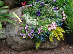 This rock makes a beautiful planter.
