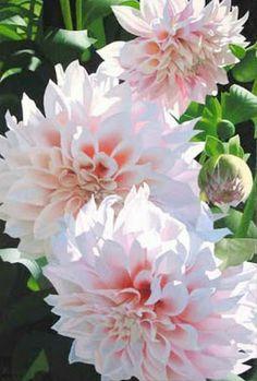 Pintura Moderna al Óleo: Cuadros bonitos de flores