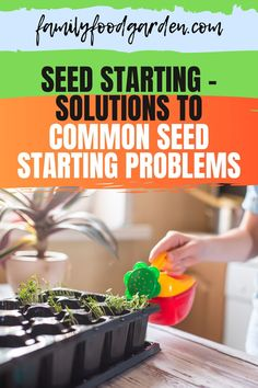 Learn some solutions to common seed starting problems such as leggy plants, molds, or it simply just didn't sprout. Here's everything you need to know about seed starting plus a few tips on how to handle them. See it here! #gardening #gardeningtips #seedstarting Beef Recipes, Cooking Recipes, Gardening Tips, Vegetable Gardening, Seed Starting, Kitchen Recipes, Easy Cooking, Sprouts, Breakfast Recipes
