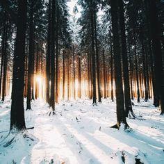 Snow + forrest