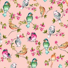 Watercolor Birds by Bianca Pozzi on Creative Market