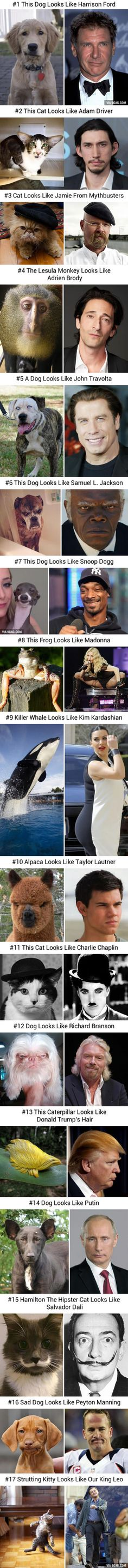 17 Best Look Like Pictures you ever seen: Animals vs Celebrities and Famous People - funny photo hilarious Funny Animal Pictures, Funny Photos, Funny Animals, Cute Animals, Funny Cute, The Funny, Animal Memes, Make You Smile, Laugh Out Loud