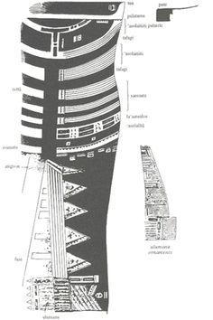 Back of the Leg