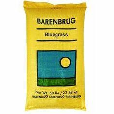 Barenbrug Usa 50Lb Pro Bluegrass Seed 491123 Grass Seed by BARENBRUG USA. $78.23. Barenbrug #491123 50LB Pro Bluegrass Seed. BARENBRUG USA. 50 LB, 85/80 Kentucky Bluegrass Seed, Bulk Bagged.. Save 44% Off!