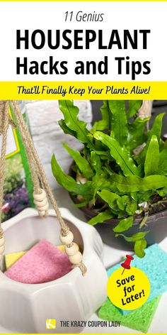 Who doesn't need plant care tips and houseplant hacks? Raise your hand if you love having houseplants around, but somehow kill them within a few weeks? With these houseplant tips and plant hacks from The Krazy Coupon Lady we can raise our plants to be beautiful and healthy as much as any green-thumber can- for cheap too. You can also get cheap and free houseplants and keep them alive through the seasons. Wondering how to propagate succulents or how to water an orchid? We've got you covered! Baby Succulents, Propagating Succulents, Planting Succulents, Big Plants, Water Plants, Garden Plants, Uses For Coffee Grounds, Replant, Potting Soil