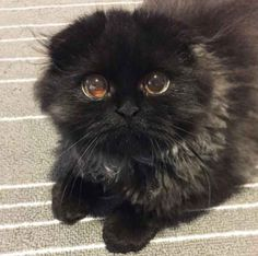 Gimo, a cat featured on the Instagram account 1room1cat, has a pair of huge, round, sparkling eyes that will hit you with intense cuteness.