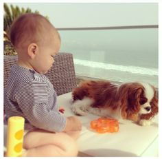 Cavalier King Charles ~ Puppies and Babies ~ new friend