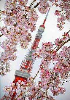 Tokyo Tower through cherry blossoms