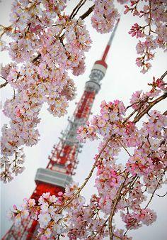 japan tokyo tower salura cherry blossom pink
