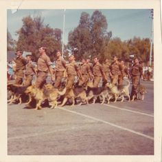 Military Working Dogs, Military Art, War Dogs, Defence Force, Doggies, South Africa, Dolores Park, Sad, Army