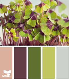 green color scheme | the long popular color scheme eggplant and greens is a classic that ...