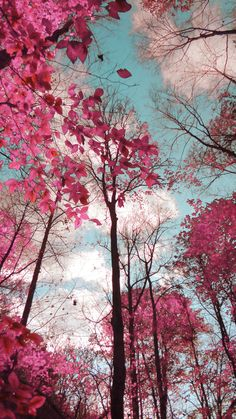 Dreamy Landscape Pink Blue Trees Surreal by TiffanyDawnSmith