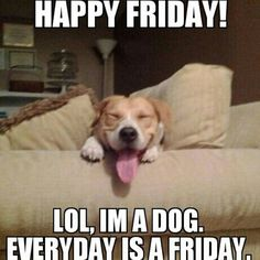 #friday  #beagle  #dog  #weekend  #meme  #dogmeme  www.anilols.co.uk for more funny animals #cats