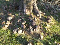 Tree root nodules