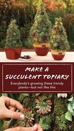 A succulent topiary suggests an evergreen tree yet makes viewers do a double take. It's a container garden with a twist: a moss-filled cone planted with eye-catching, low-water, easy-care succulents. Container Herb Garden, Diy Garden Projects, Garden Ideas, Garden Makeover, Evergreen Trees, Garden Club, Succulents Garden, Topiary, Beautiful Gardens