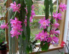 pics ratail cactus | lunes, 7 de noviembre de 2011