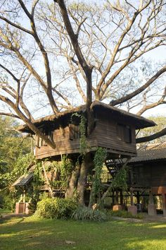 Amazing use of flora in the way of building homes using natural materials where we can...  treehouses