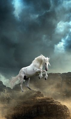 Stallion and The Storm