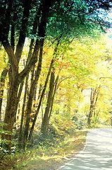 Teresa Johnson - Autumn Path