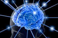 Wissen Neuroplastizität    Ein Schlaganfall ist ein einschneidendes Ereignis, bei dem es zu einem plötzlich einsetzenden Ausfall bestimmter Funktionen des Gehirns kommt. Teilweise sogar mit Zerstörung des Gewebes. In schweren Fällen können Bewegungsabläufe verloren gehen, die aber in bestimmten Fällen wieder erlernt werden können. Denn unser Gehirn ist an das lebenslange Lernen angepasst. Es ermöglicht Nervenzellen sich zu reorganisieren