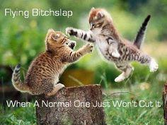 Kitty Meow!